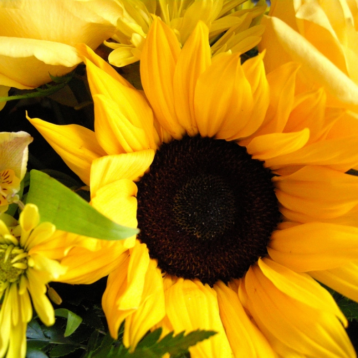 Flowers 047